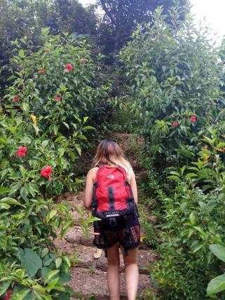 Exploring the butterfly garden
